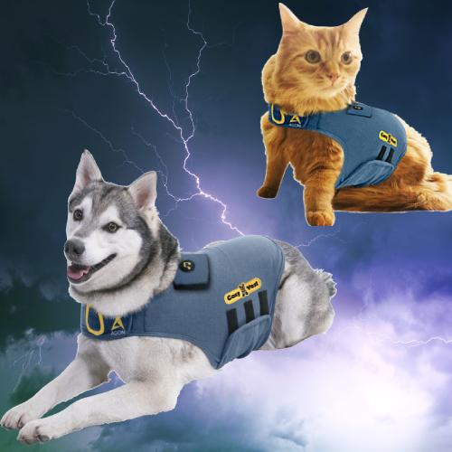 חתול וכלב על ברק מובייל