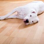כלב שוכב על הרצפה