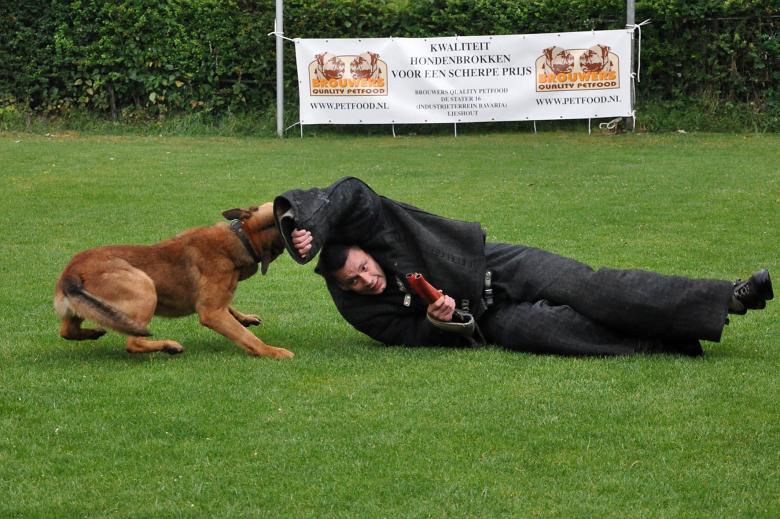 כלב נושך אדם בדשא