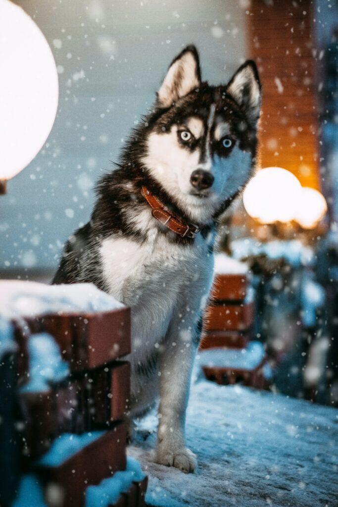 למה כלב מפחד מרעמים
